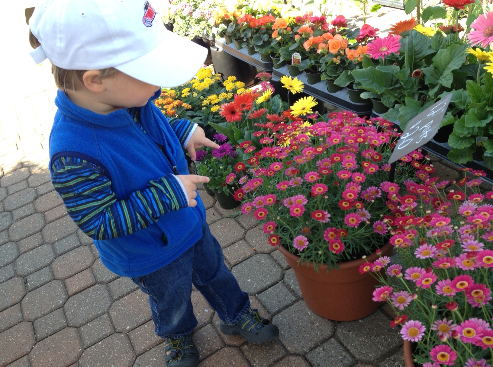 this was actually taken the other day, but h was up to the same delightful antics at today's market--pointing out all of the beautiful flowers and exploring to his heart's content. if anyone can tell me what those little pink beauties are, i'd be so grateful...love them and want them to fill up the yard!
