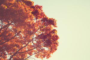 Retro Fall tree